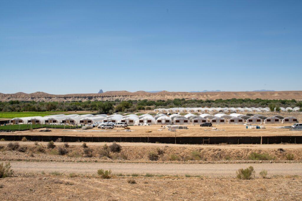 A large hemp growing operation, involving dozens of greenhouses, near Shiprock.